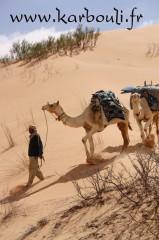 massoud,karbouli,dromadaire,solidaire,ghlissia,tunisie